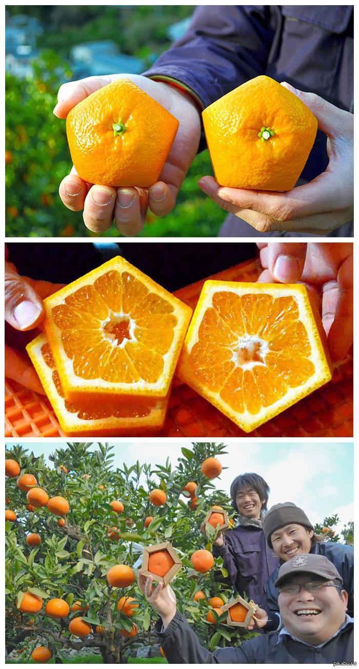 Пятиугольные апельсины