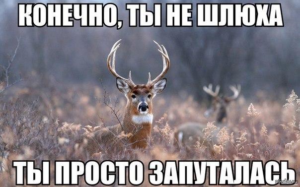 http://cs2.pikabu.ru/post_img2/2014/01/24/6/1390550264_2013149906.jpg