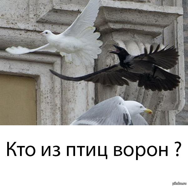 Ворона- оборотень . В новостях обычная серая ворона.
