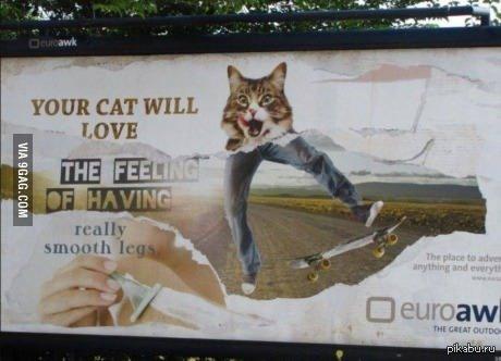 Это рекламааа.................. билбордов! Вашему коту понравится__ощущение__по-настоящему гладких ножек)