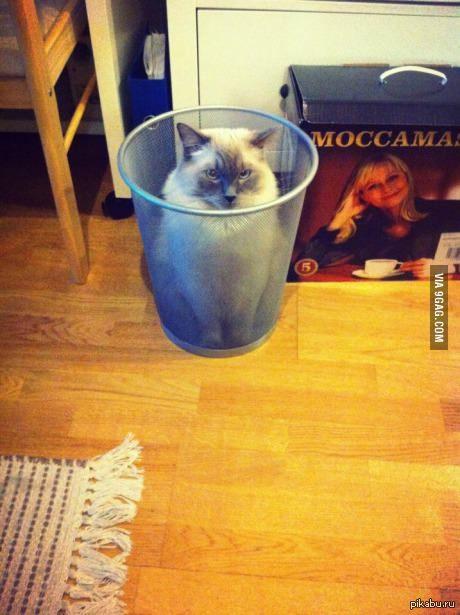 Котейка спрятался от пылесоса(= нагло сжижено