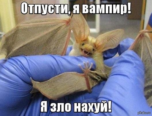 https://cs2.pikabu.ru/post_img2/2014/02/04/10/1391527928_1250642895.jpg