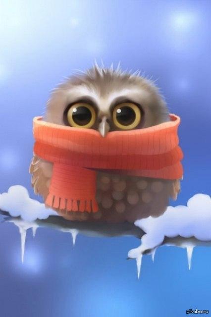 фото сова милая