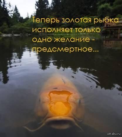 Открытки дню, картинки про золотую рыбку смешные жарь меня