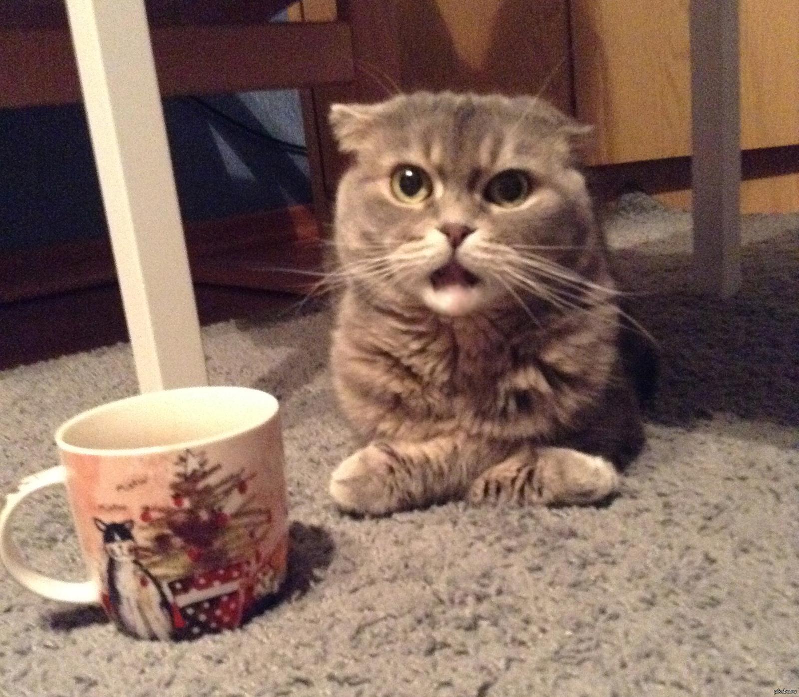 предлагаем картинки с котами и чаем и мы не подкачаем перемешать