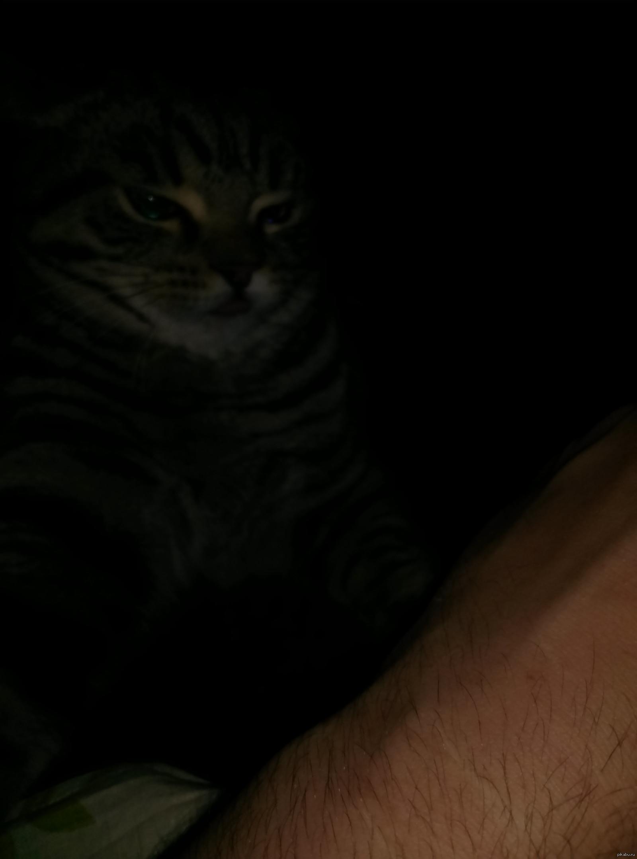 Кот из ада Этот гавнюк готовится укусить мою руку