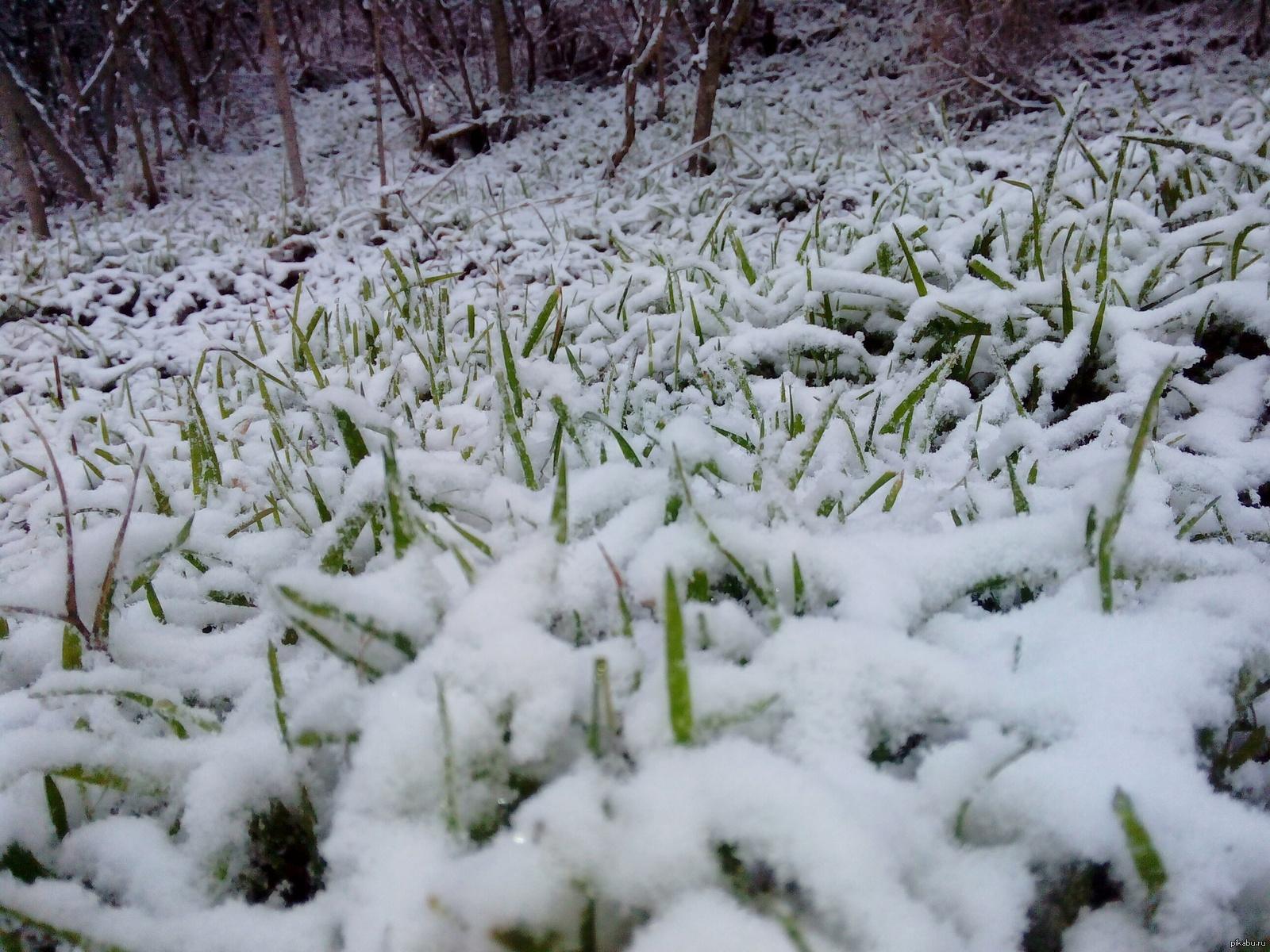 Суровая зима на ЮБК...она такая)