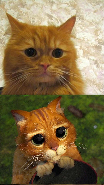 Прикольными, картинки кот из шрека