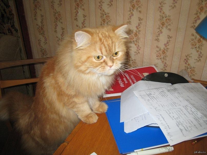 Полезная информация для тех, чей кот всего боится