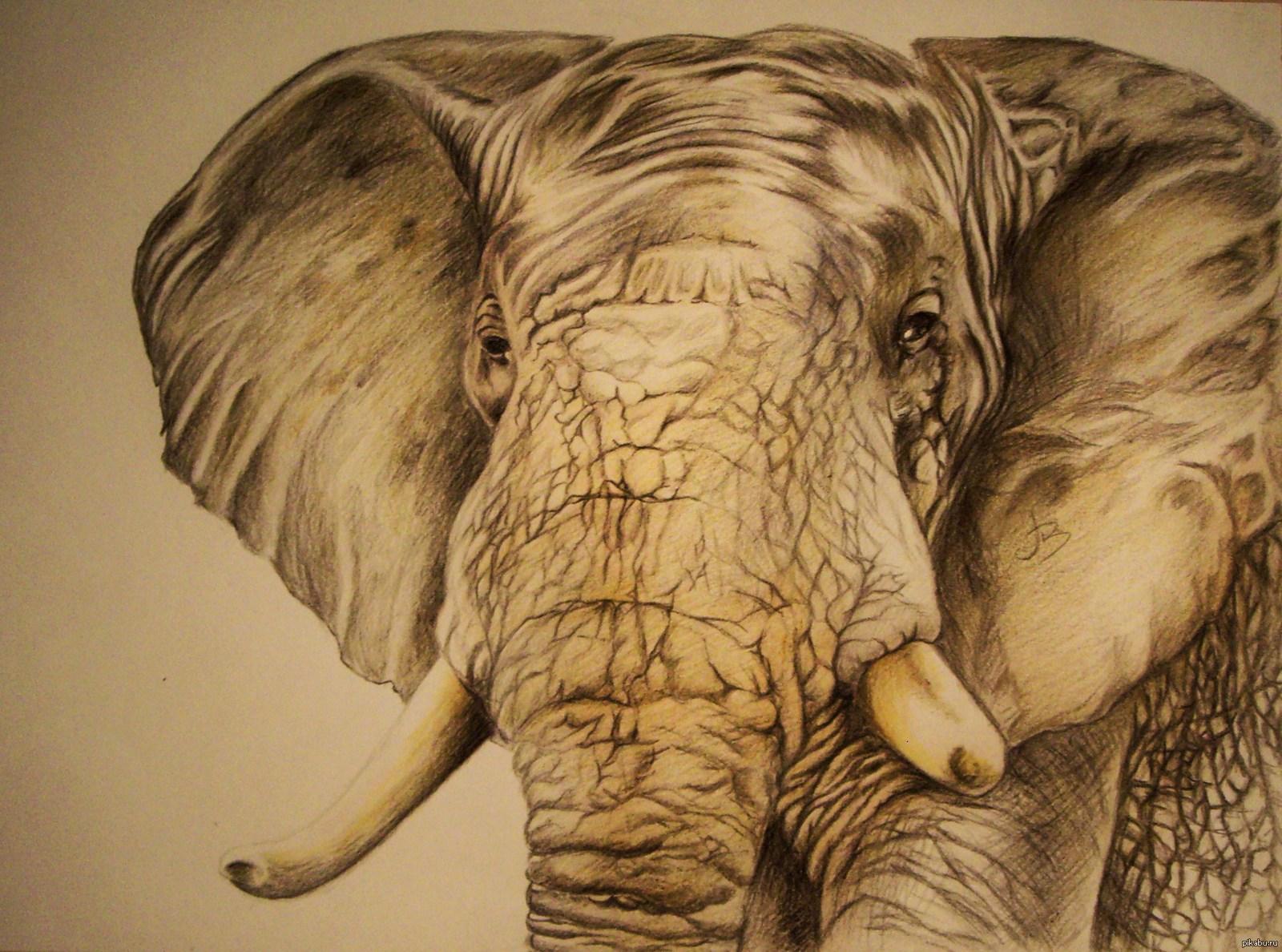 Картинки смешные, картинки со слонами нарисованные